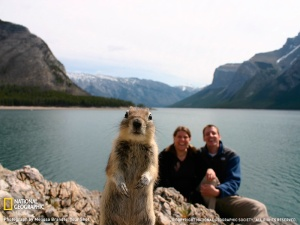squirrel-portrait-banff-sw