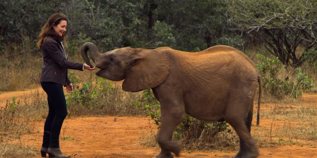 Kate (Kristin Daivs) feeding a baby elephant.