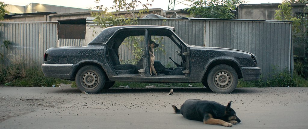 Two dogs, one sitting in an emptied car wreck, the other lying in front of it.