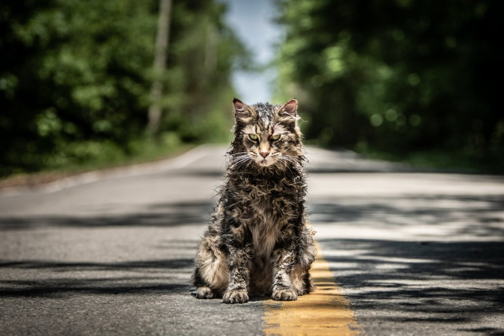 A very disheveled cat sitting in the middle of the road.